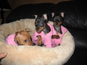 pink pups1