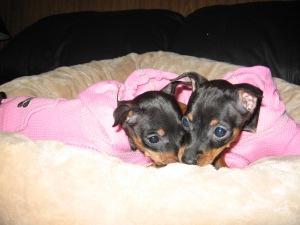 pink pups3