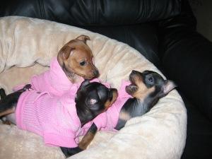 pink pups4