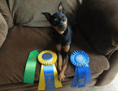 Malibu's first agility title2